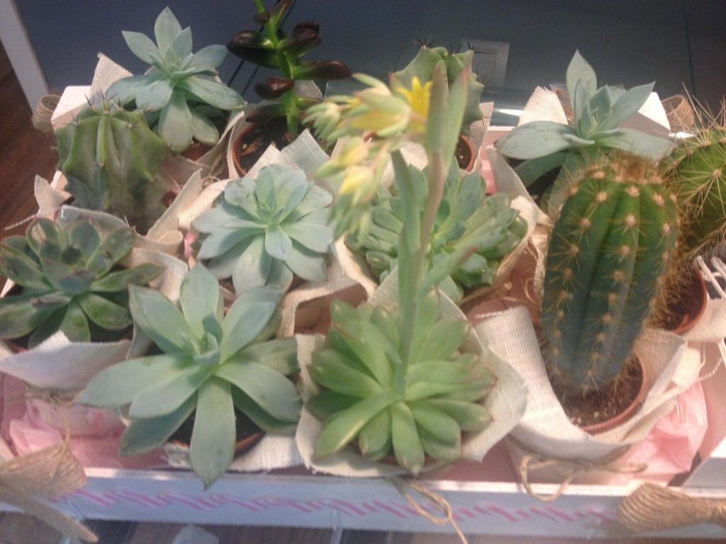 detalles para invitados primera comunion cactus